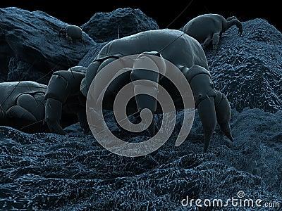 Dust mite illustration
