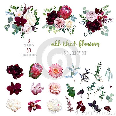 Dusty pink and creamy rose, coral dahlia, burgundy and white peony flowers Vector Illustration