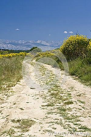 Dusty road in the field