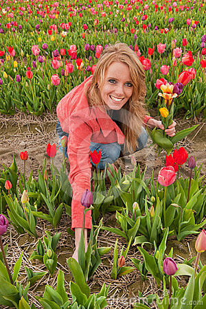 Free Dutch Blond Girl In Plucking Tulips Stock Photos - 24351893