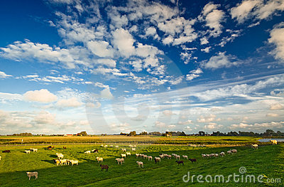 Dutch Farmland  Landscape Stock Photos - Image: 3078663