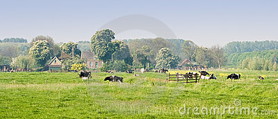 Dutch landscape with farm and cows