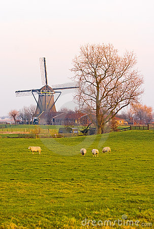 Free Dutch Landscape In Winter With Mill And Sheep Royalty Free Stock Photos - 9525848