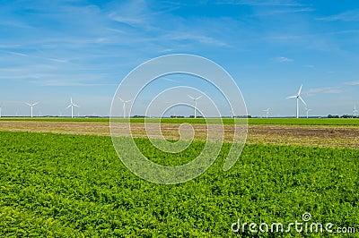 Dutch Landscapes - Flevoland