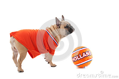 Dutch soccer dog