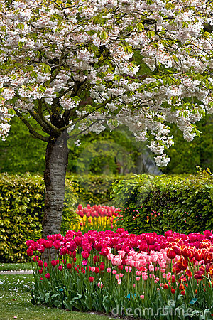 Free Dutch Spring Garden  Keukenhof  In Holland Royalty Free Stock Photography - 14857717