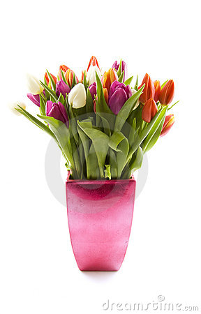 Free Dutch Tulips Royalty Free Stock Images - 12610199