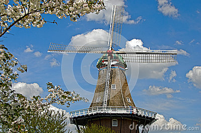 Dutch Windmill with cherry blossoms