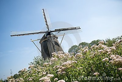Dutch windmill and flowers