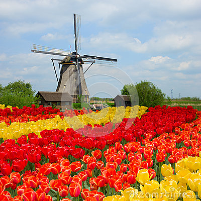 Dutch Windmill Over Tulips Field Royalty Free Stock Photography ...
