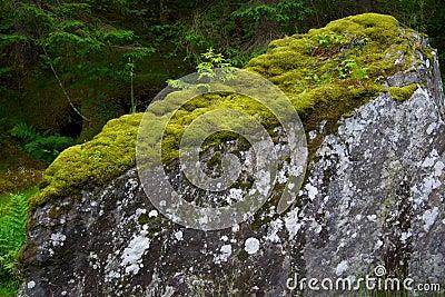 Duży kamień