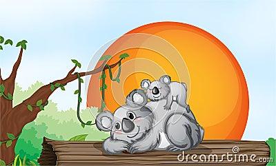 Dwa niedźwiedzia