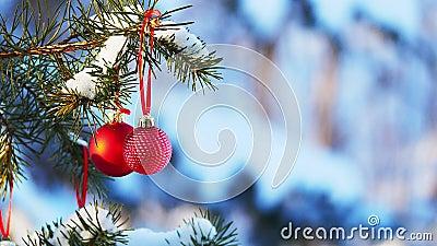 Dwie dekoracje Red Christmas Balls wiszące na pokrytej śniegiem gałęzi drzewa sosnowego na zewnątrz ze śniegiem w tle Delikatne p zbiory