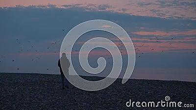 Dwie sylwetki na tle morza i zachodu słońca Samiec biegnie po ptakach na zachodzie słońca zbiory wideo