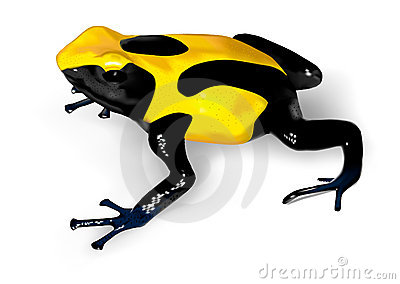Dyeing Poison-Dart Frog