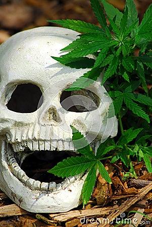 Free Dying For Marijuana Royalty Free Stock Photography - 10853277