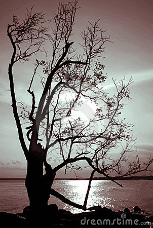 Dying Tree Silhouette