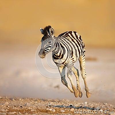 Działająca dziecko zebra