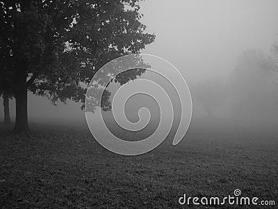 Dzień dobry mgła