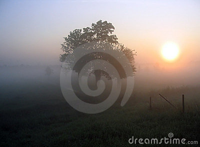 Dzień dobry mgła.