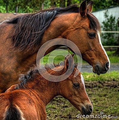 Dziecka źrebięcia koński klacza matki profilu widok