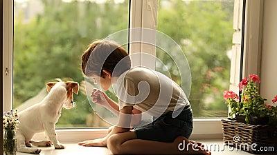 Dziecko bawić się z jego psim przyjacielem na okno zdjęcie wideo