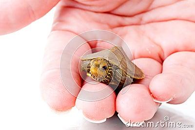 Dziecko żółw