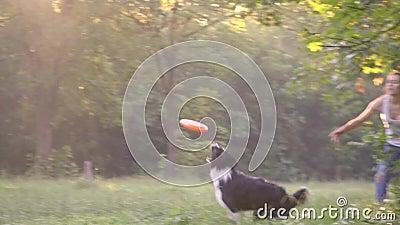 Dziewczyna treser rzuca pomarańczowego frisbee i pies Border collie biega po tym jak ja na zielonym gazonie, zwolnione tempo strz zdjęcie wideo