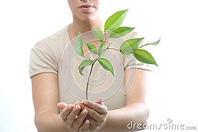 Dziewczyna trzyma małego drzewa