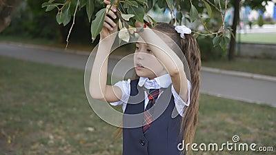 Dziewczynka w szkolnym mundurze z liści drzew i dokładnie ją bada Drzewo domowe zbiory