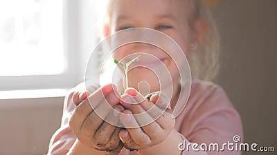 Dziewczyny mienia młoda zielona roślina w rękach Pojęcie i symbol przyrost, opieka, ochrania ziemię, ekologia zbiory wideo