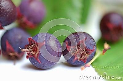 Dzikie owoce jagodowe