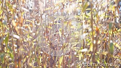 E Stäng sig upp av ängväxter på solljus färgrik natur för bakgrund brigham arkivfilmer