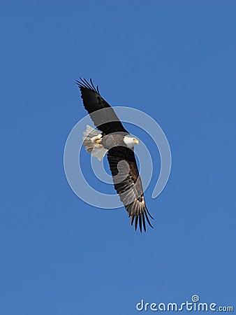 Eagle-07