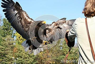 Eagle 66