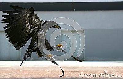 Eagle 86