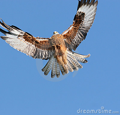 Free Eagle Approaching Royalty Free Stock Photo - 684285