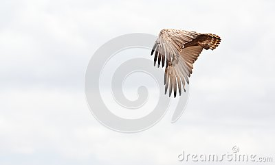 Eagle flies free in the african sky