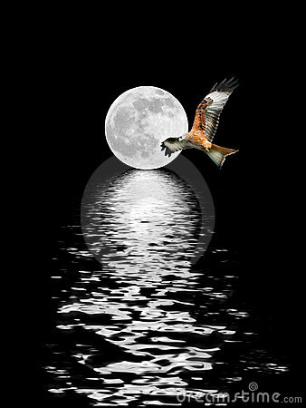 Free Eagle Flying At Full Moon Royalty Free Stock Images - 6363089