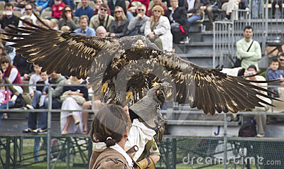 Eagle flying to get food on man s hand Editorial Photography