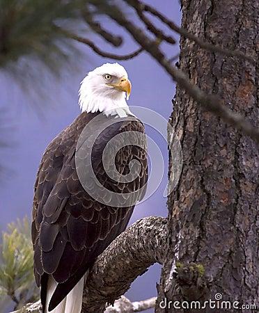 Eagle framed by flora.