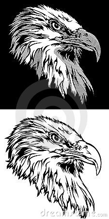 Eagle Head Mascot Head Logo