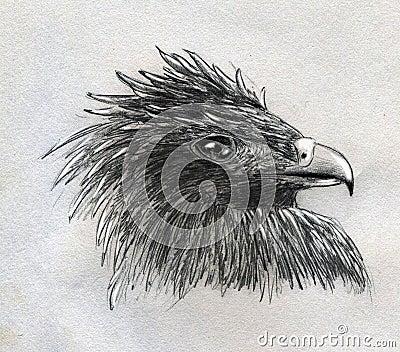 Eagle head sketch