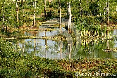 Eagle Lake Everglades Habitat --Naples, FL