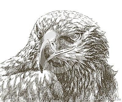 Eagle line art