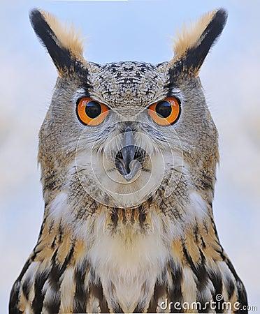 Free Eagle Owl. Stock Images - 38438044