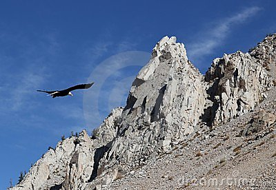 Eagle with rocky peaks