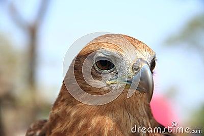 Eagle s eye