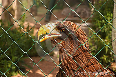 Eagle, sits behind a lattice