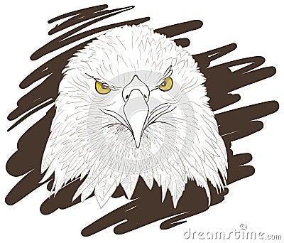 Eagle sketch.